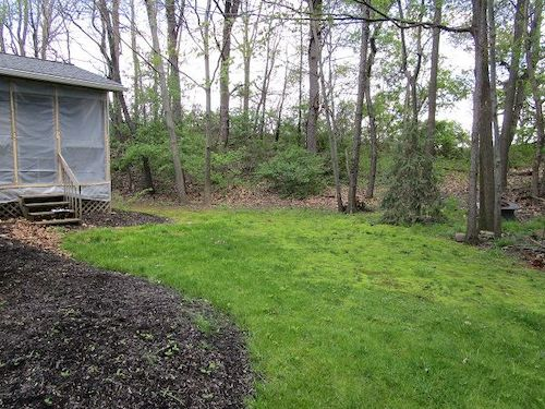 The original landscape featured an unattractive mix of grass and moss due to the damp, shaded conditions, and served no real purpose for the homeowner.