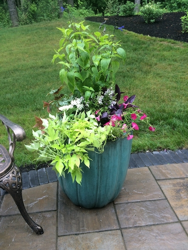 Seasonal landscape colors featured in a patio planter