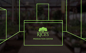 Rice's Production Center Concept Drawing